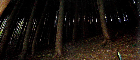 森林の現状